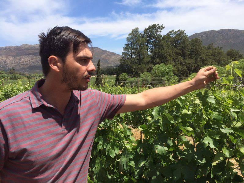 Neil Russouw_Lemberg_Kaaps Wijnhuis