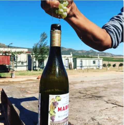 Zuid afrikaanse Chenin Blanc uit Swartland